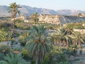 """El Palmeral de Abanilla - conocido como el """"Oasis Palestino de Murcia"""""""
