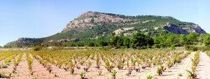 El Monte Arabí, envuelto en campos de viñedos D.O Yecla.