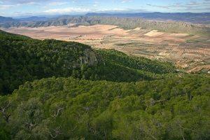 Sierra Salinas, montaña con gran masa forestal, frente a la montaña rocosa que se divisa en el horizonte, El Serral.